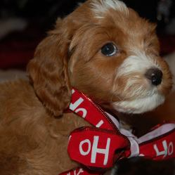"""Ignoring the opinion of the """"dreamcrusher"""" Stephanie brought home the newest 4-legged member of our family...meet Teddy """"Baird"""""""